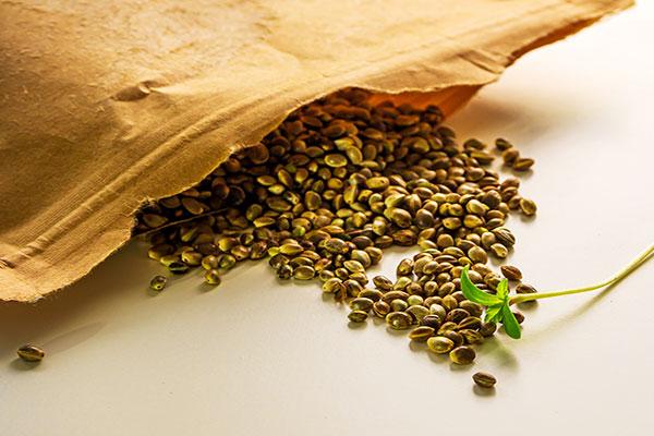 free-cannabis-seeds