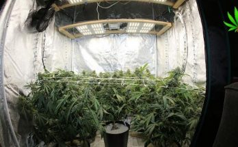 marijuana stealth grow box