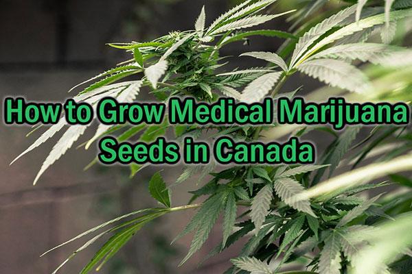 How-to-Grow-Medical-Marijuana