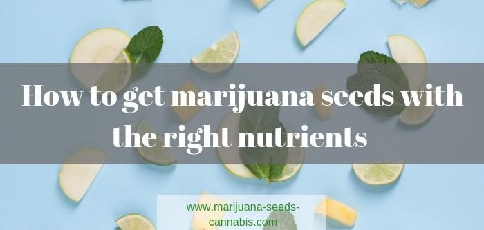 how to get marijuana seeds