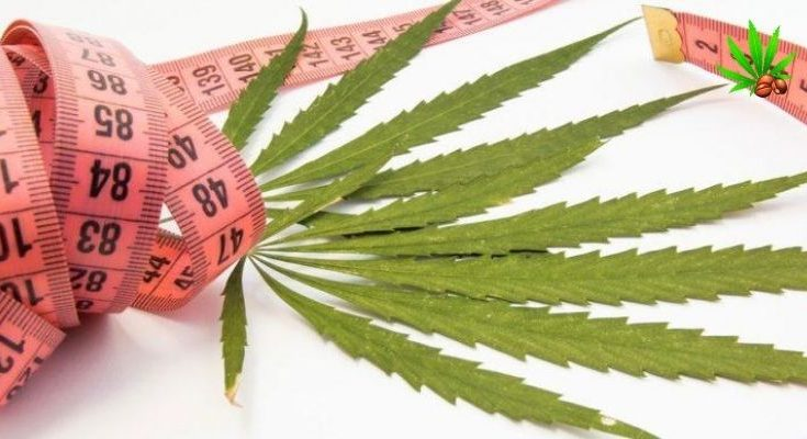 can-cbd-oil-make-you-gain-weight