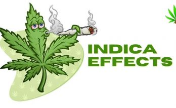 indica-effects