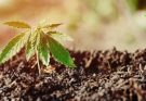 best soil for indoor marijuana