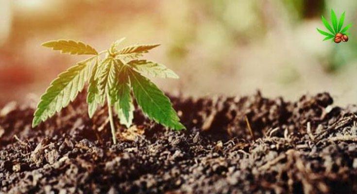 best soil for indoor marijuana