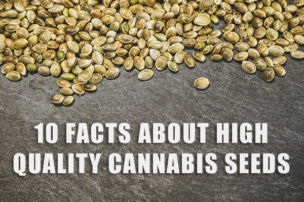 facts-about-cannabis-seeds