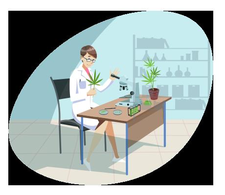 Cannabis-Laboratory