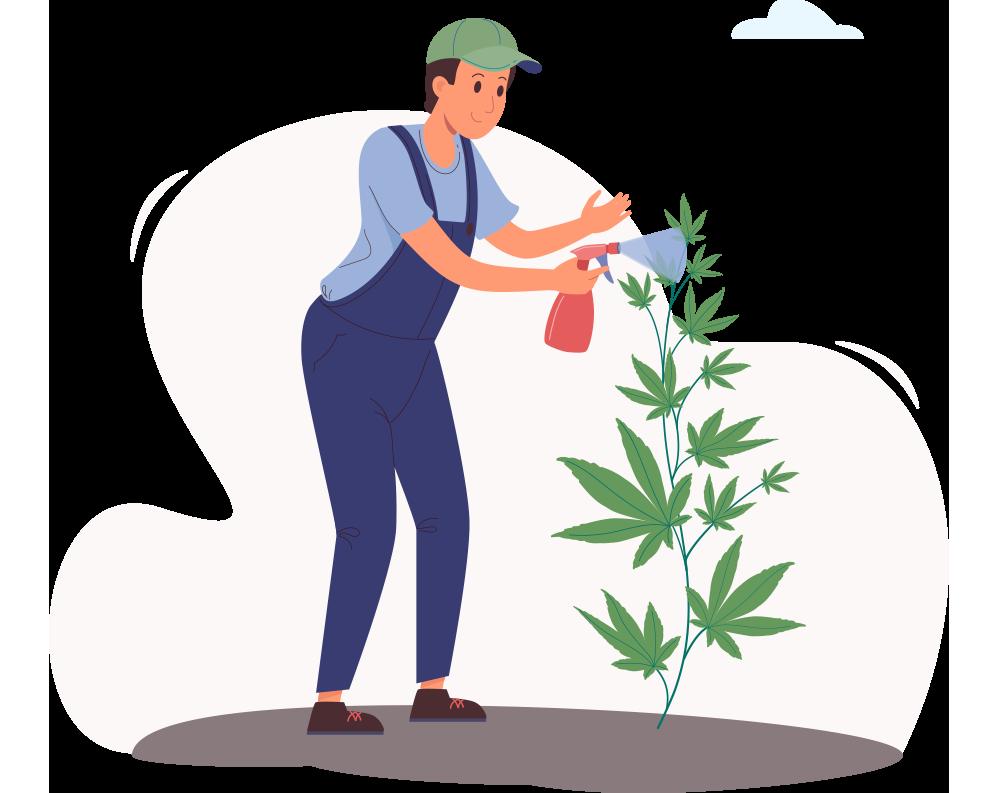 Marijuana-Cultivation