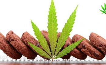 best strains for edibles