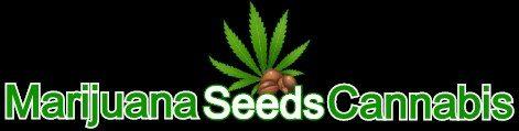 Marijuana Seeds Cannabis